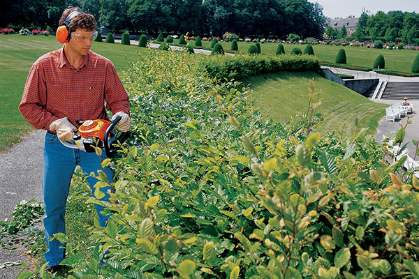 Stihl |  Hedge Trimmers | Homeowner Hedge Trimmers for sale at Rippeon Equipment Co., Maryland
